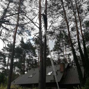 Alpiniści przemysłowi - wycinka drzew