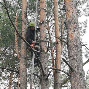 Wycinanie drzew na wysokości